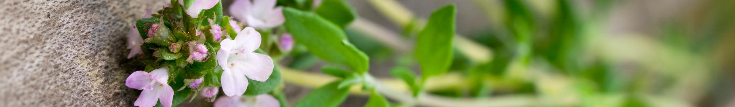 Mission bio naturel écologique | Bioéternel cosmétiques